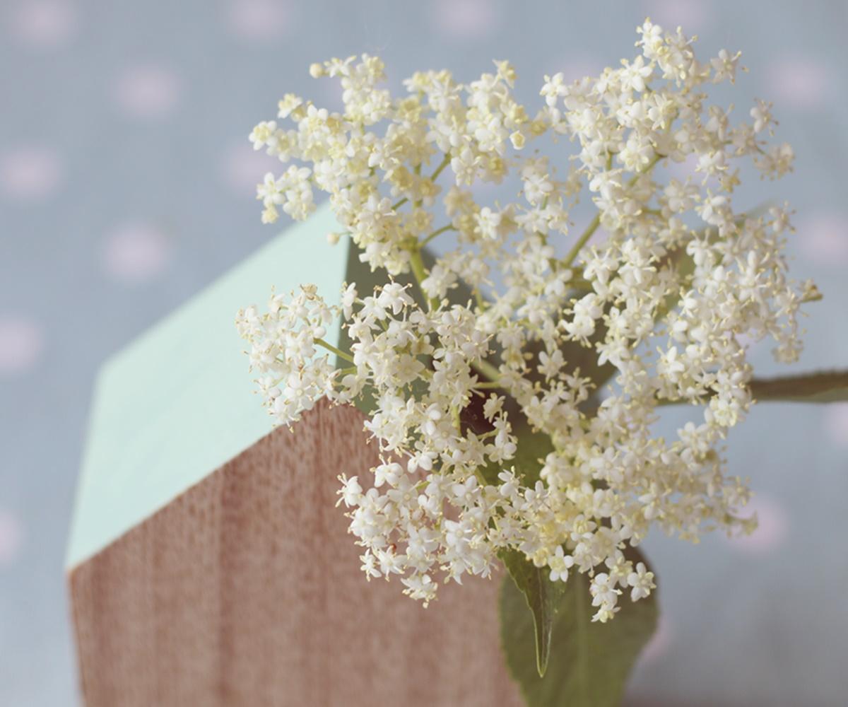 Kwiaty czarnego bzu są idealne na przetwory, syrop, miodek, ocet i rachuchy